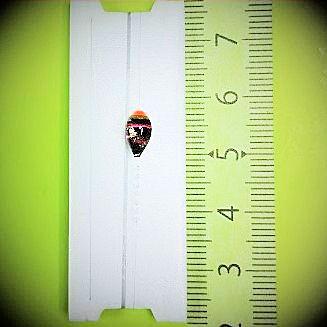 画像1: 新作ポン太工房プロトタイプの中通し浮き仕掛け 山吹 蛍光オレンジ(トップ)/黒×ピンク(ボディ)  モノスレッドスモーク